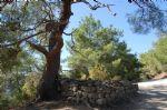 Adatepe Köyü Erdem Dede Yatırı