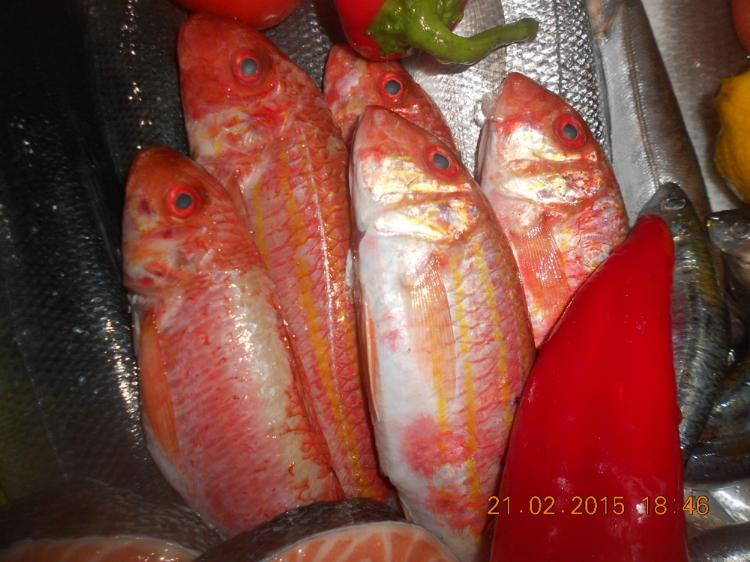 Balık Çeşitlerimiz