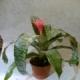 Saksı Çiçekleri,arajman, cicek, çiçek, çiçekci, saksı çiçek, orkide çiçekcilik, gül, gül demeti, lale, orkide, kasımpatı, yapma çiçek, çiçek buketi, çelenk, hediyelik eşya, güller, gul buketi, kasımpatı, krizantem, sevgililer günü, önemli günler, yapay çiçek, celenk, davet, organizasyo